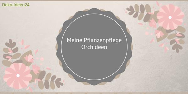 Meine Pflanzenpflege – Orchideen (1)