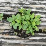 Deko-Ideen24 Blog: Baumrinde Pflanze