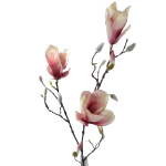 flor 39