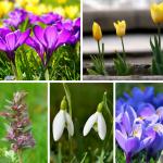 fruehlingsblumen-collage