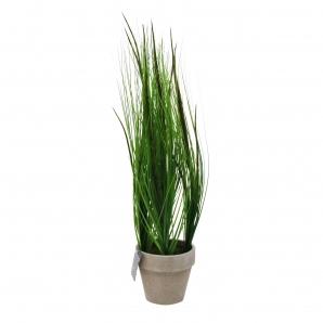 Gras im Topf  - 63cm 1Stk