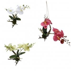 Orchidee an Wurzel in drei Farben 30cm 1Stk