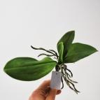 Orchideenblatt grün in zwei Größen 1Stk