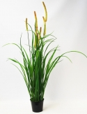 Gras - Wiesengras im Topf  70cm 1Stk