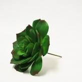 Echeveria (Sukkulente) d=10cm 4 Stück