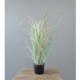 Gras - Grasbusch gefrostet im Topf 40cm