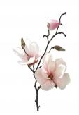 Magnolienzweig rosa-creme 89cm 1Stk