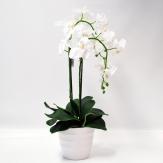 Orchidee weiß im Topf 60cm