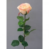 Gartenrose Langstiel hellrosa 69cm 6 St.