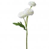 Bellis weiß 30cm 6Stk
