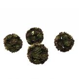 Echeveria-Ball grün/rot 5cm 4Stk