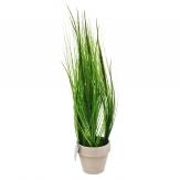 Gras im Topf  - 50cm 1Stk