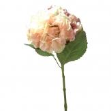 Hortensienzweig pink-apricot 63cm 1Stk