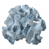 Koralle hellblau 16cm 1Stk