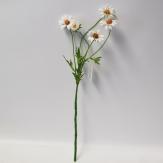Margaritenzweig 50 cm  (6St)