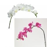 Orchideenrispe weiß oder violet 77cm 1Stk