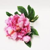 Pfingstrosenbouquet rosa 35cm 1Bd