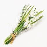 Schneeglöckchenbund weiß 27cm 1Stk
