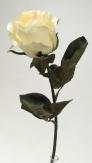 Seidenrosen creme-weiß Ø7cm 6Stk