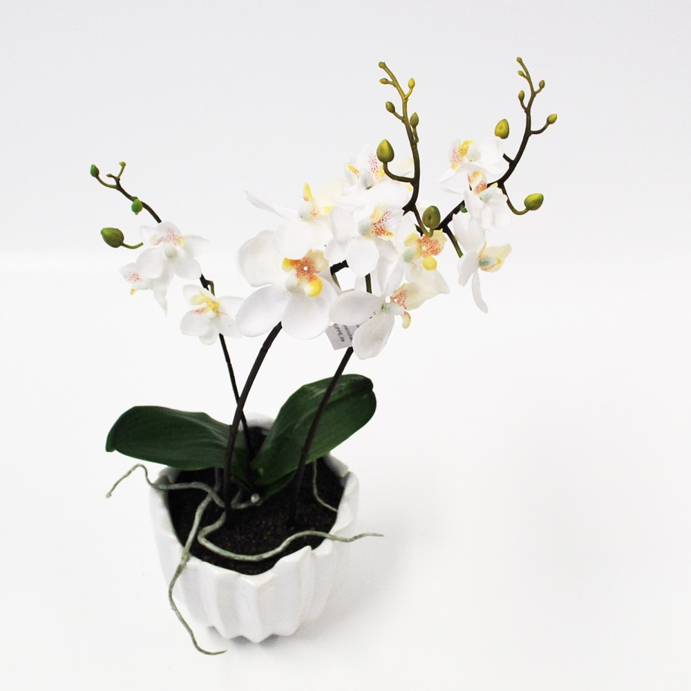 orchidee wei im topf 33cm 1stk g nstig kaufen. Black Bedroom Furniture Sets. Home Design Ideas