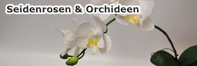 Seidenrosen &  Orchideen